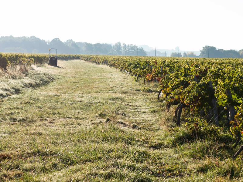 vignes-bordeaux